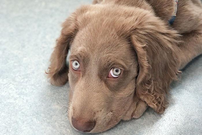 ワクチンを接種する犬