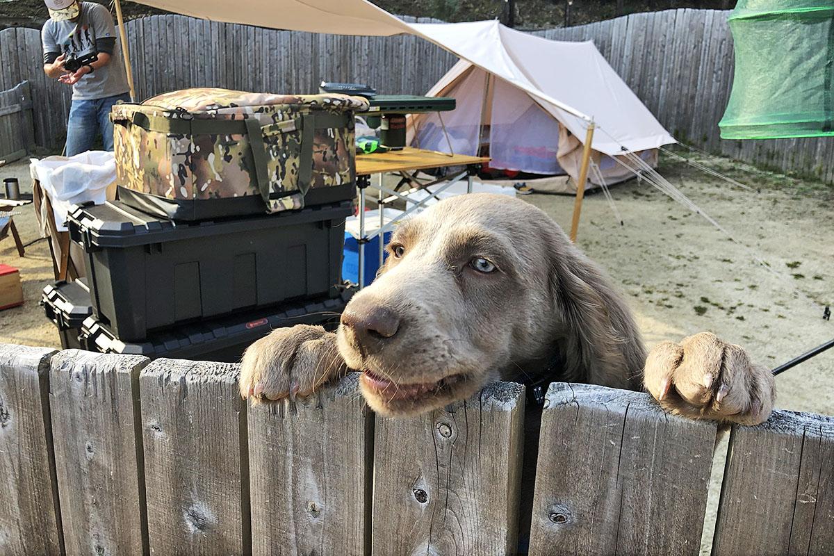 犬と一緒に行くキャンプ