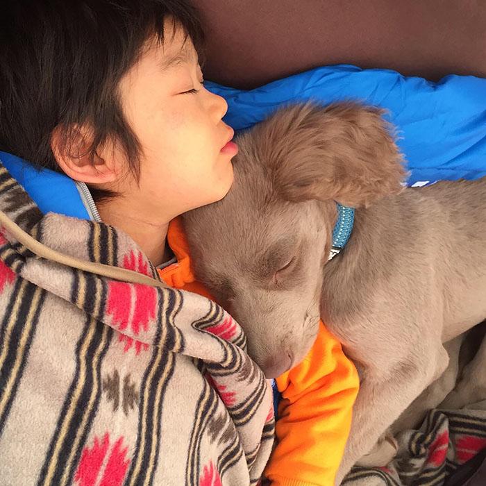 子供とワンコの寝顔